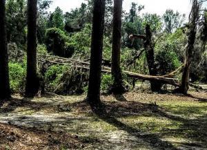 2020.04.09 Tornado Damage 37 IMG 20200409 121014812